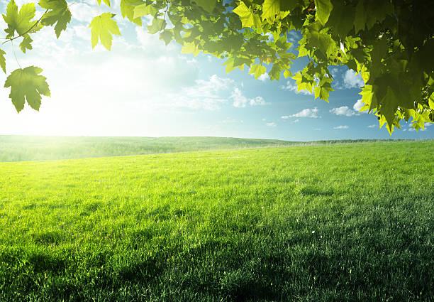 スプリングフィールドの芝生と森林 ストックフォト