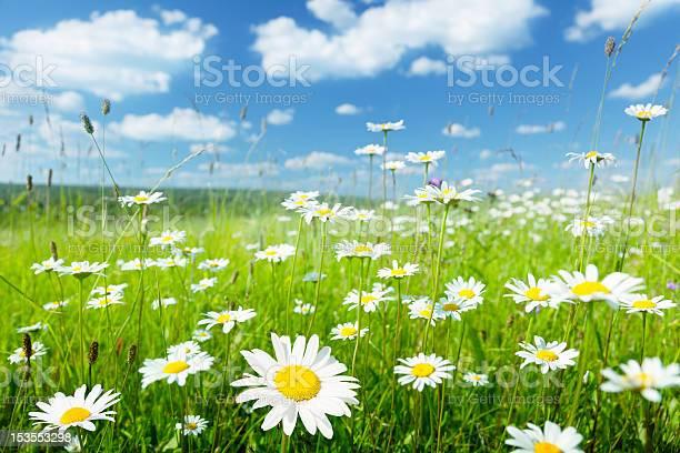 Field of summer flowers picture id153553298?b=1&k=6&m=153553298&s=612x612&h=wu0h3vuffe r8bx8x3otqtts6rk buesouk8arnxb1y=
