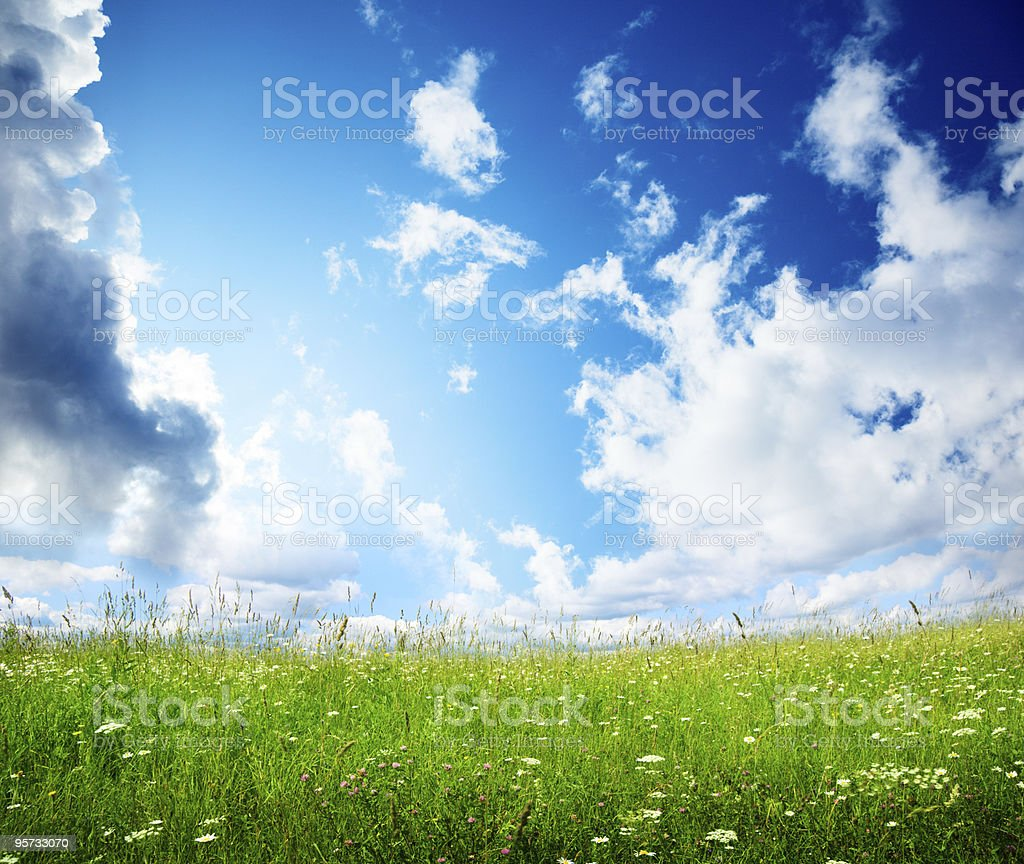 field of summer flowers royalty-free stock photo