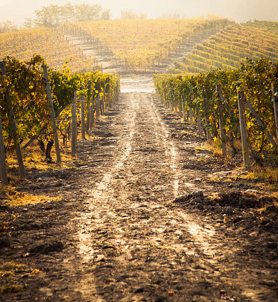 FIeld von Weingut in der Toskana – Foto