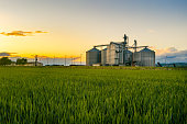 istock Field of wheat at sunset with grain silos in the back ground 1297398472