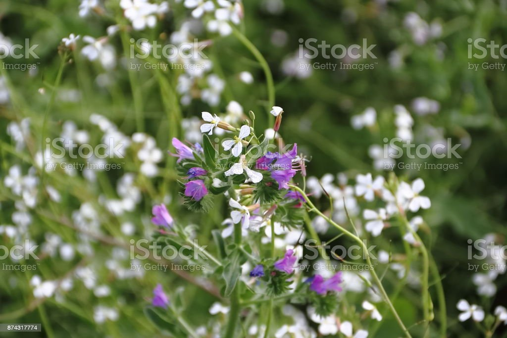 Field of white yellow blue red flowers and rustic herbs in spring field of white yellow blue red flowers and rustic herbs in spring royalty free stock mightylinksfo