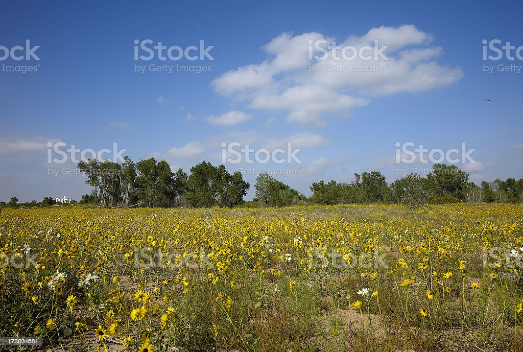 Field of wild flowers royalty-free stock photo
