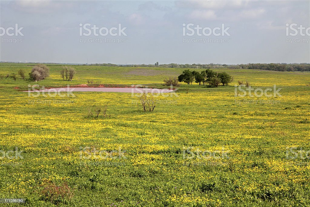 Field of Wildflowers and Pond royalty-free stock photo