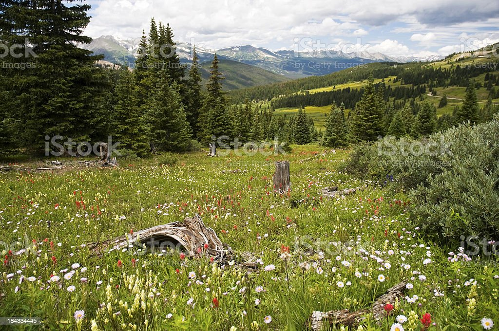 Field of Wildflowers in the Rocky Mountains stock photo