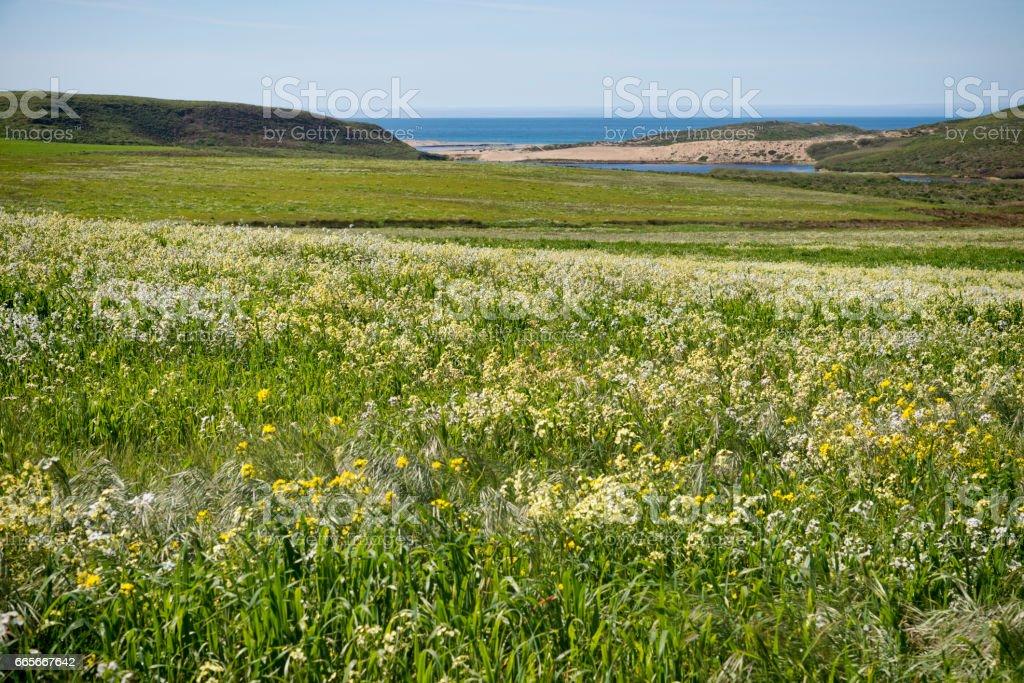 Field of wildflowers stock photo