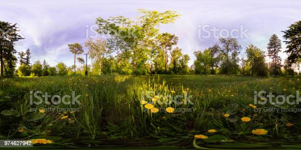 Field of yellow dandelions in the green forest at sunset spherical picture id974627942?b=1&k=6&m=974627942&s=612x612&h=xiwurdqk6kpzvnctszze7oyi6fuguyxdw bclg728la=