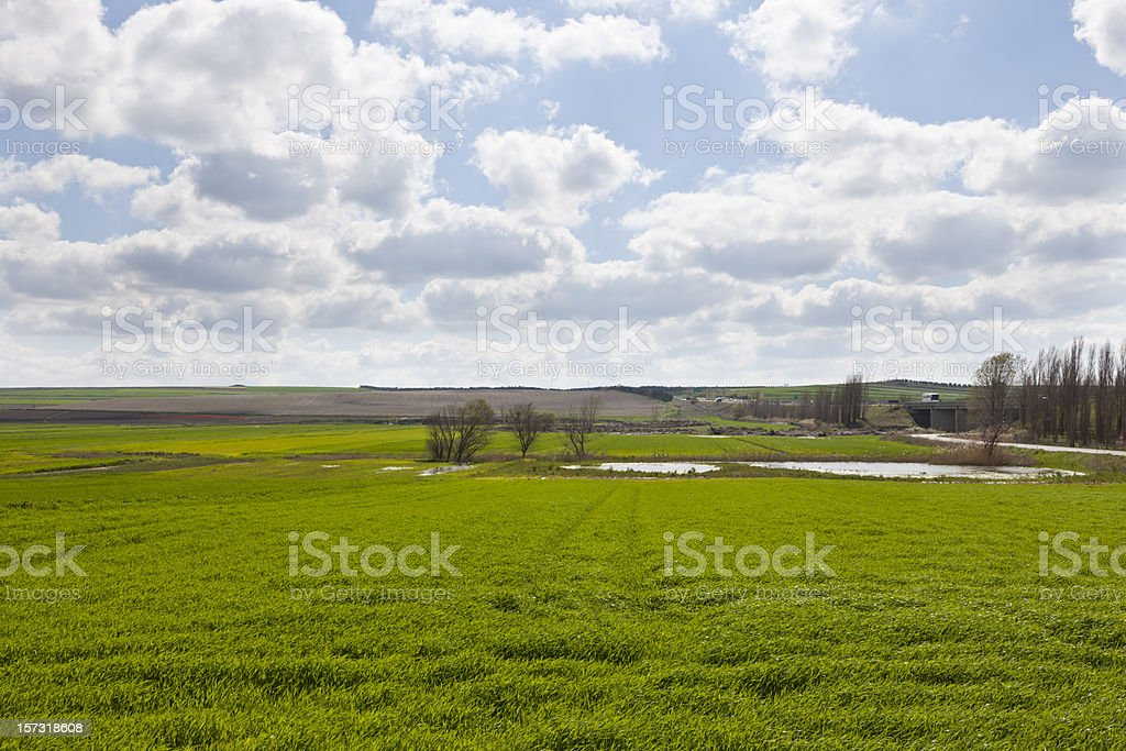 field on spring royalty-free stock photo