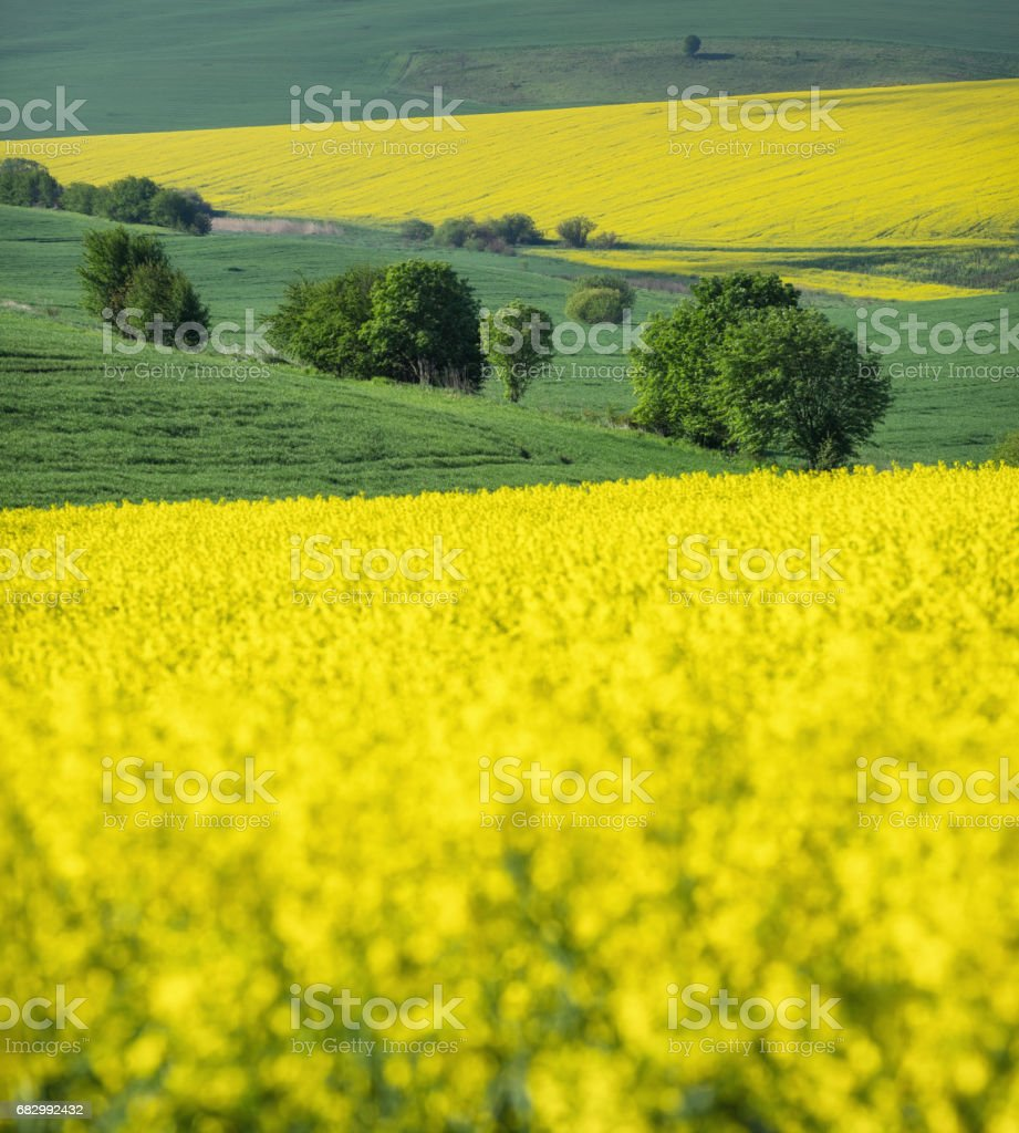 Field on the hills. Beautiful natural landscape in the summer time foto de stock royalty-free