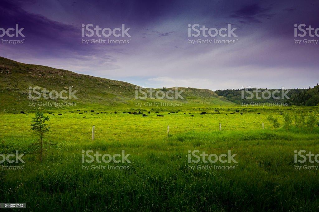 Field pasture stock photo