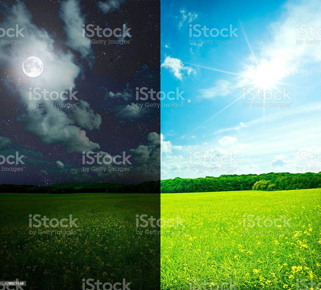 Field – Foto