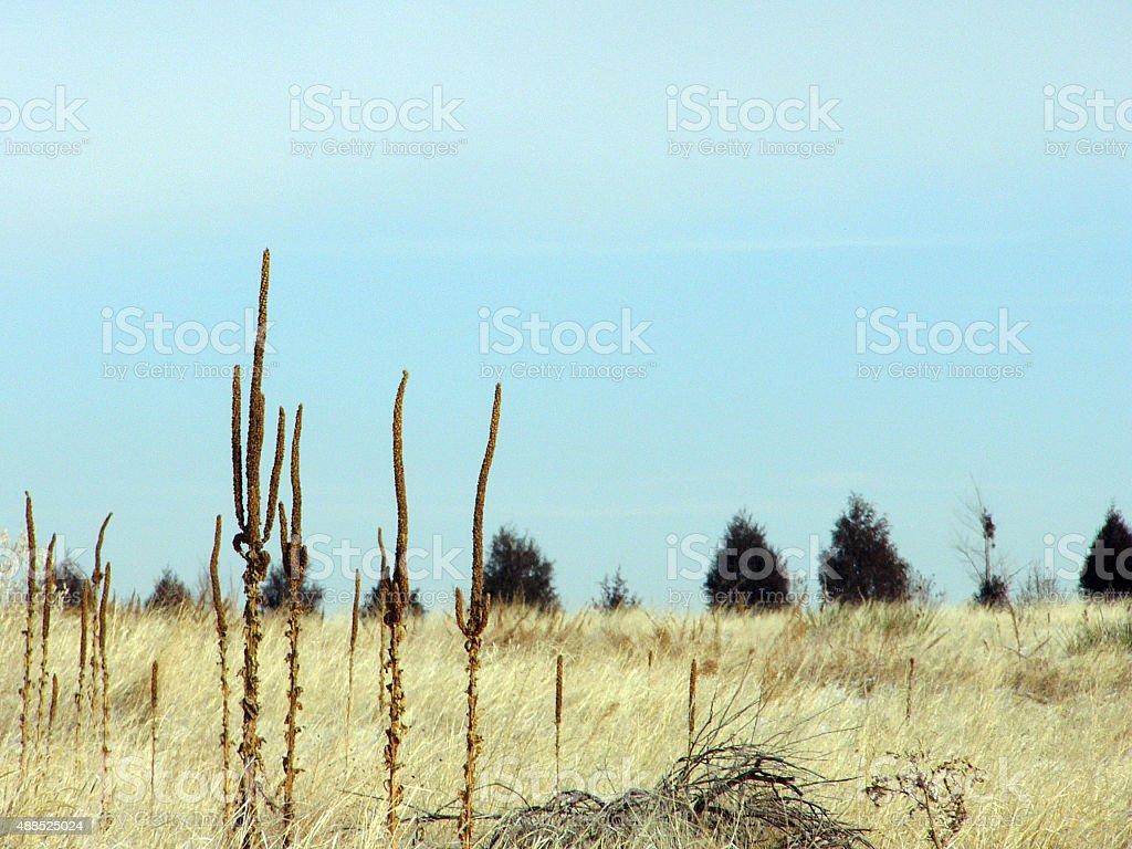 Field stock photo