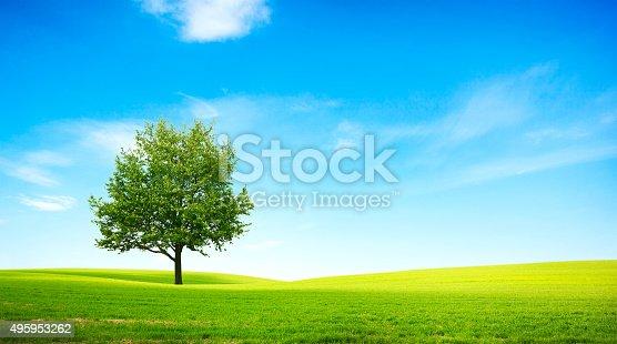 istock field 495953262