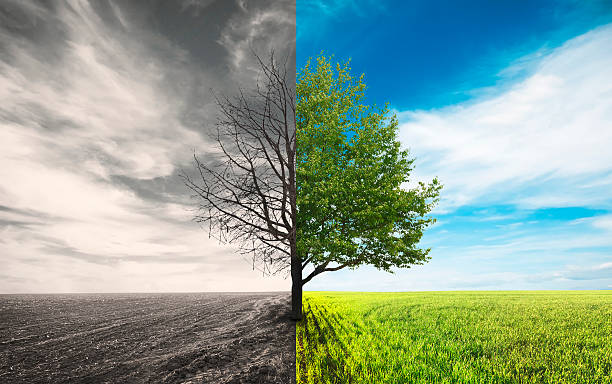 field One tree in field dead stock pictures, royalty-free photos & images