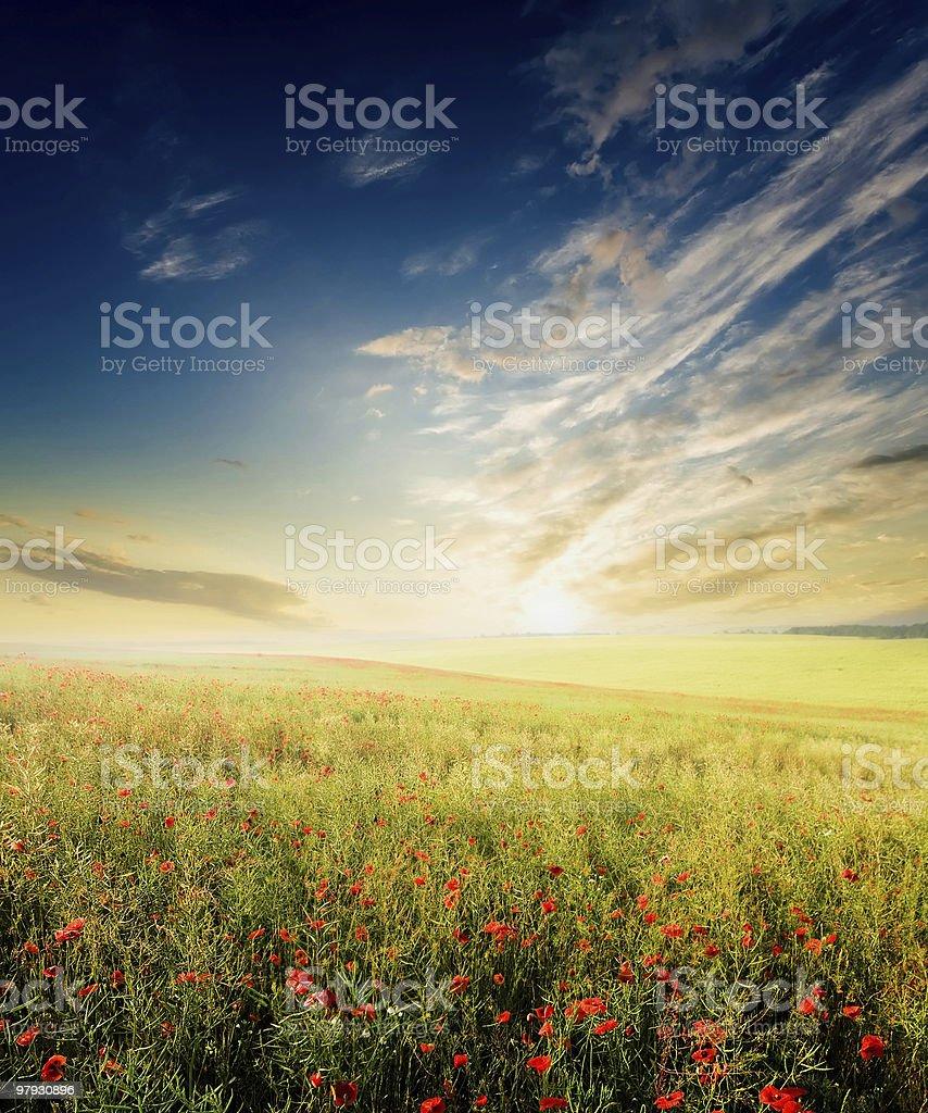 Field royalty-free stock photo