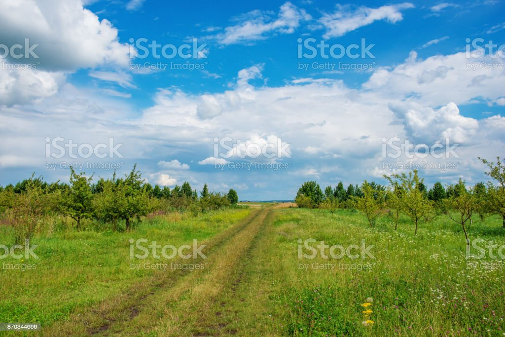 Field road on the background of the blue sky in the summer stock photo