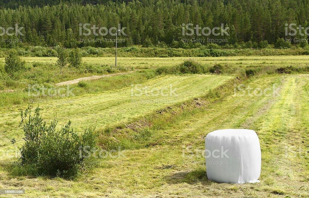 Field. Rural landscape royalty-free stock photo