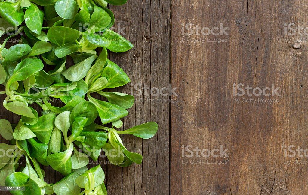 Field salad stock photo
