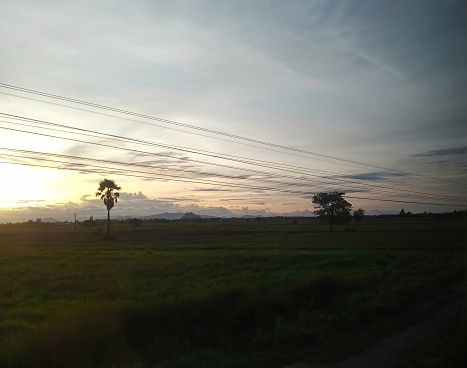 Field scenery in the morning when the sun rises, nature theme.