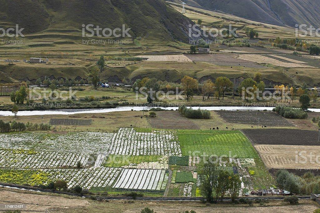 field Scenics royalty-free stock photo