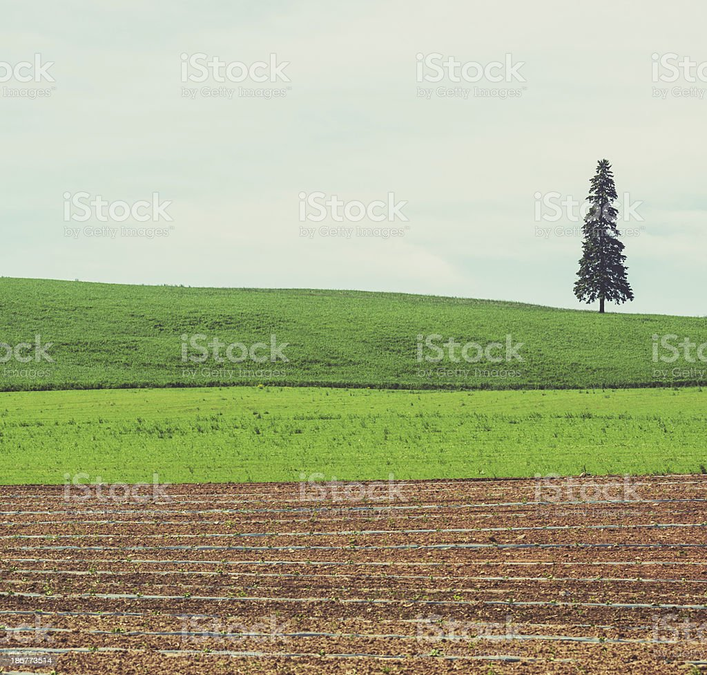 Field Simplicity royalty-free stock photo