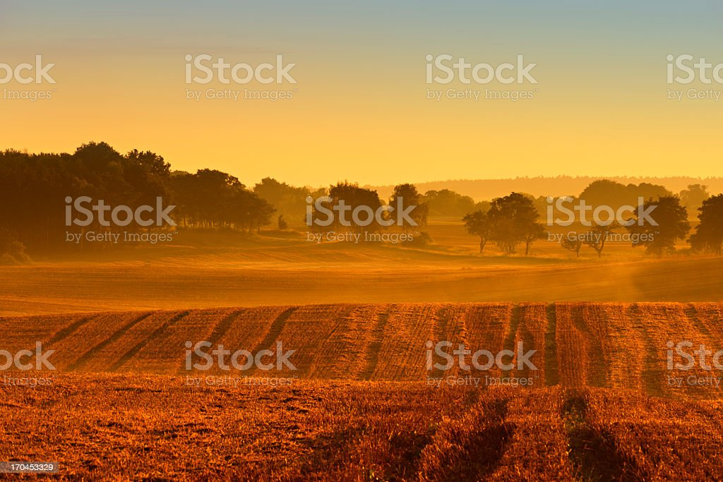 Field Stubble Landscape with Morning Mist at Sunrise stock photo