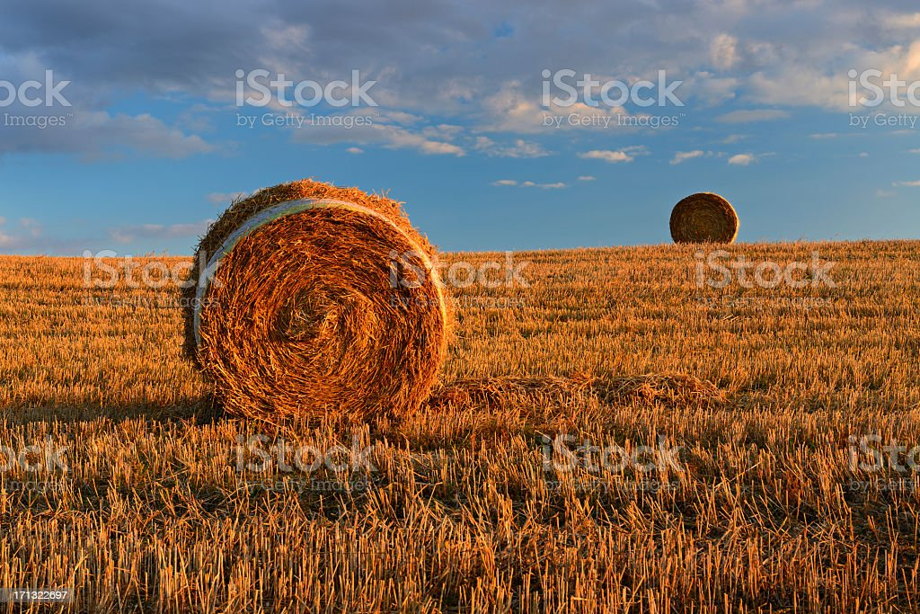 Field Stubble Landscape with Straw Bales at Sunset royalty-free stock photo