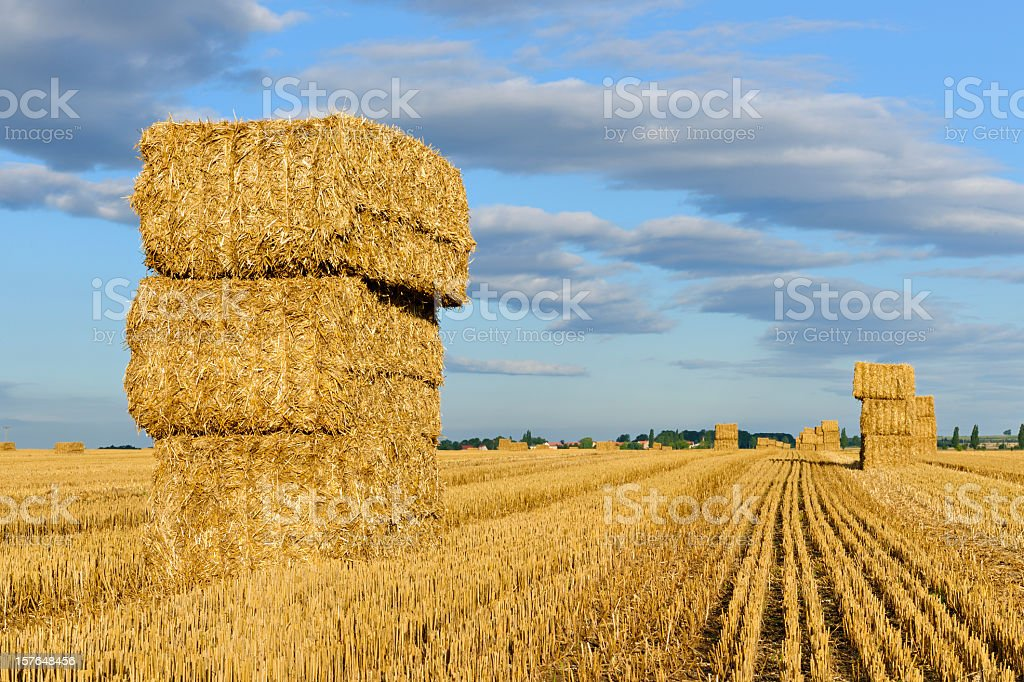 Field Stubble Landscape with Straw Bales stock photo