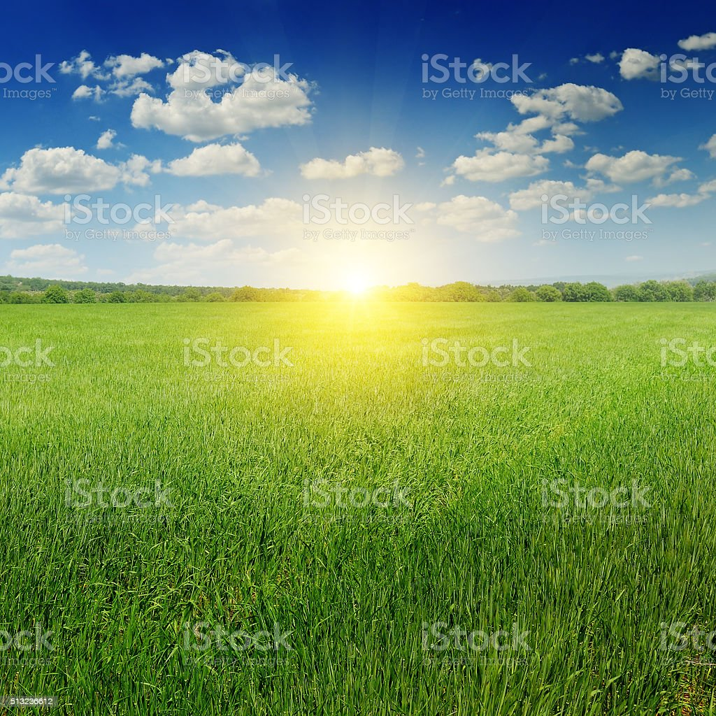 field, sunrise and blue sky stock photo