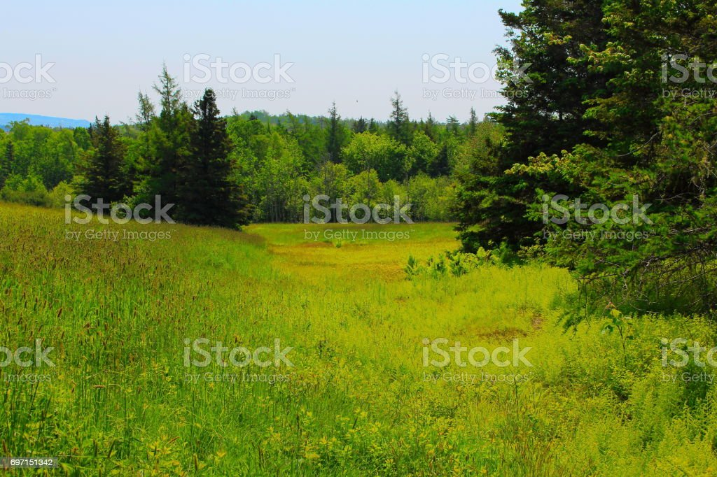 Field to Forest stock photo