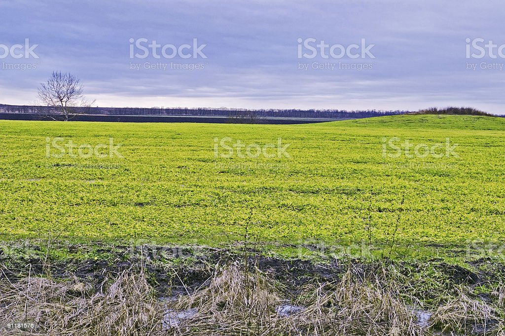Field, tree, and hill stock photo
