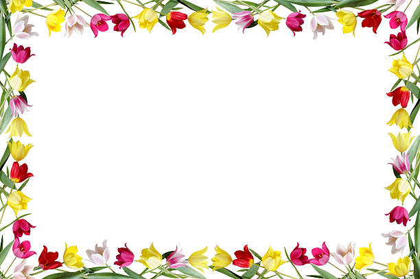 Silhouette Of A Tulip Border Stock Photos, Pictures ...