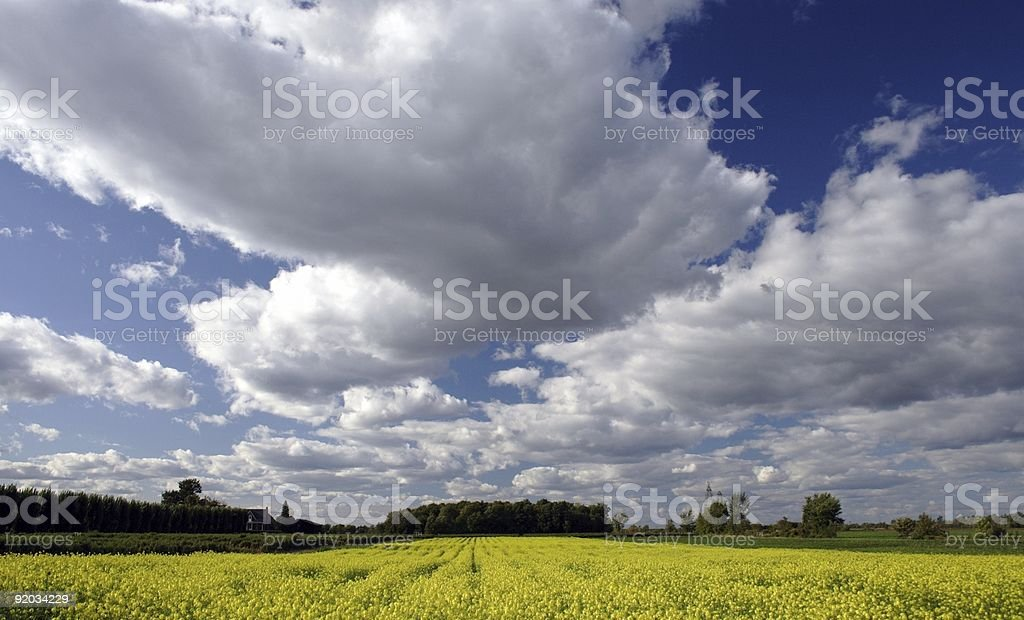 Field under a cloudy sky stock photo