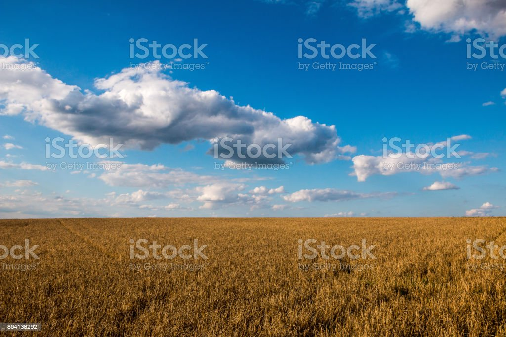 Field under few clouds royalty-free stock photo