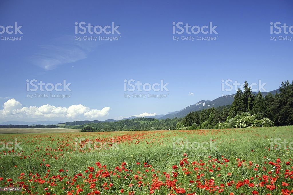 field under mountains royalty-free stock photo