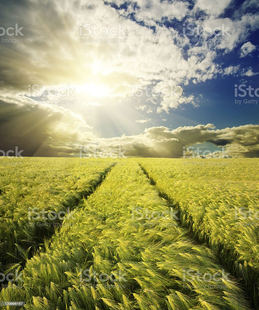 field under sunset royalty-free stock photo
