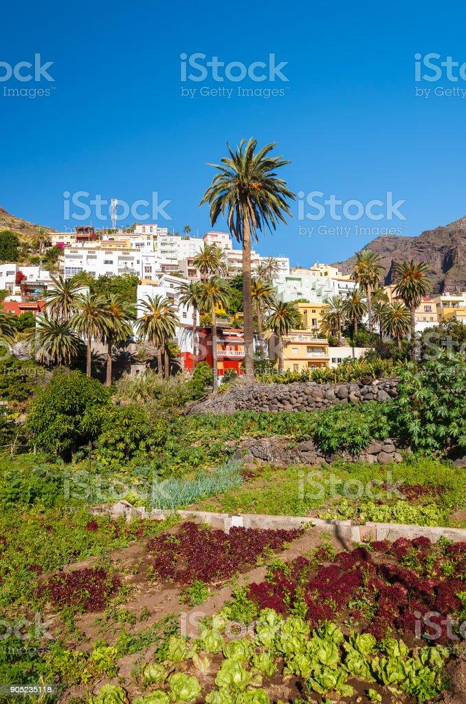 Field vegetables palm tree La Calera village houses mountain, La Gomera island, Spain stock photo