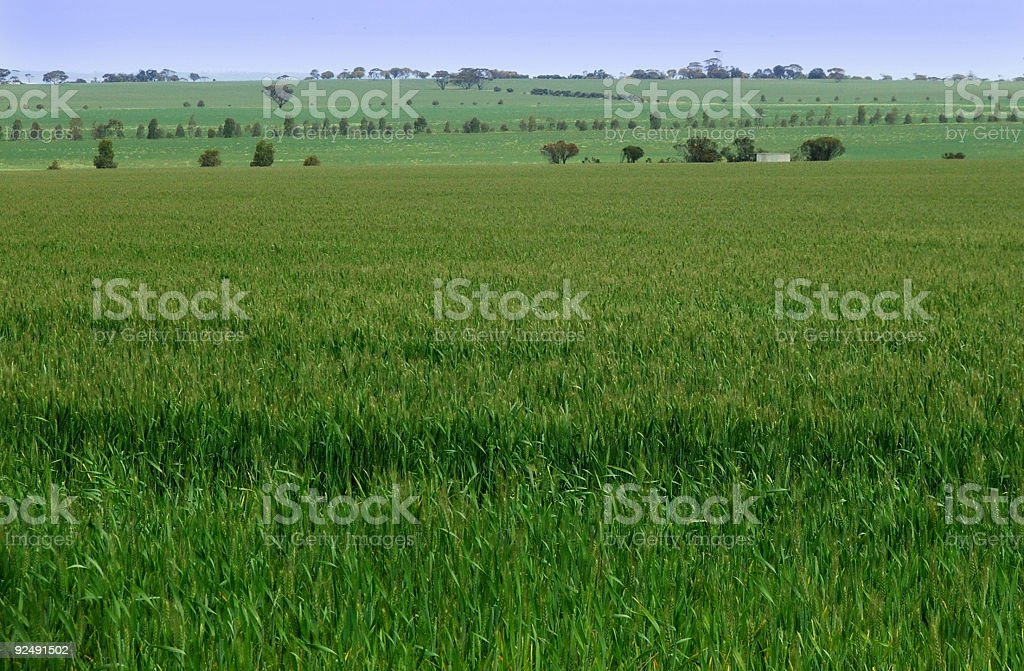 Field view royalty-free stock photo