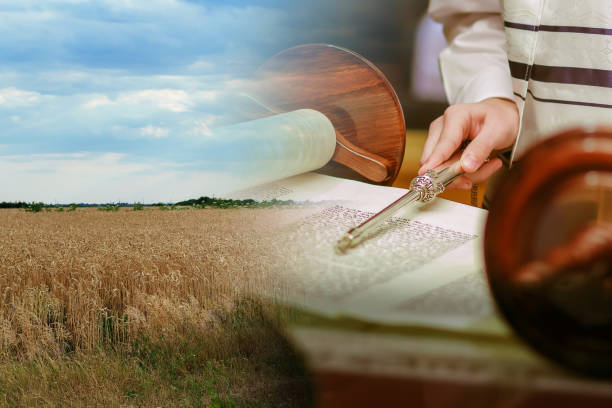 field wheat in period harvest on background sky torah reading with a pointer - pismo hebrajskie zdjęcia i obrazy z banku zdjęć