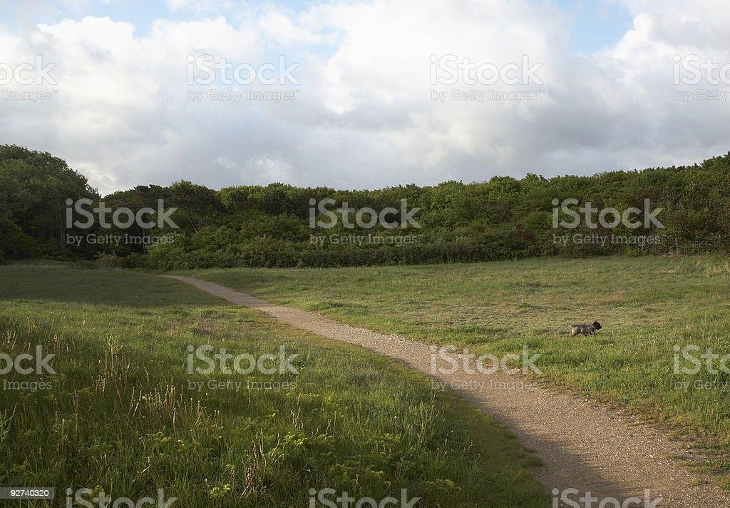 Field whit dog stock photo