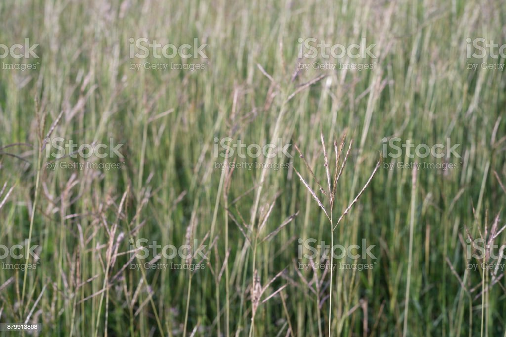 Field with a green grass stock photo
