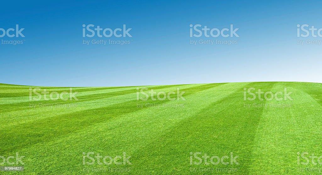 Field With Blue Sky royalty free stockfoto