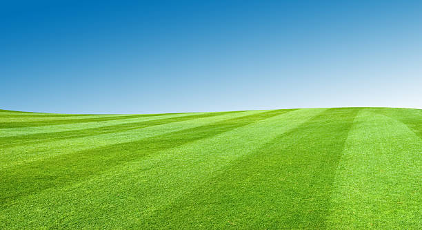 Field With Blue Sky stock photo