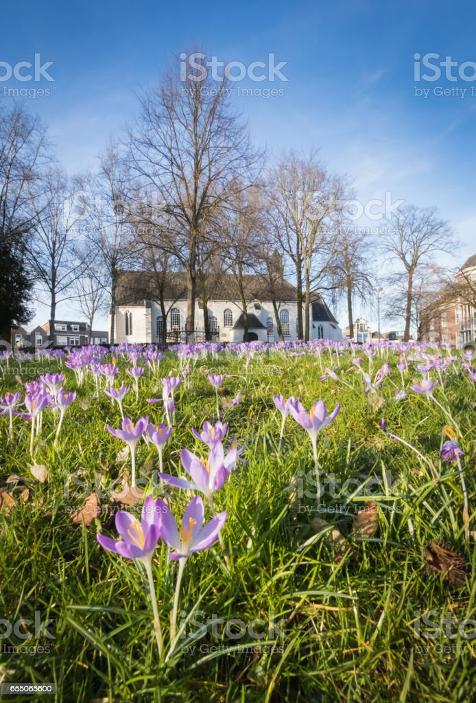 Field with crocuses around an old church. – Foto