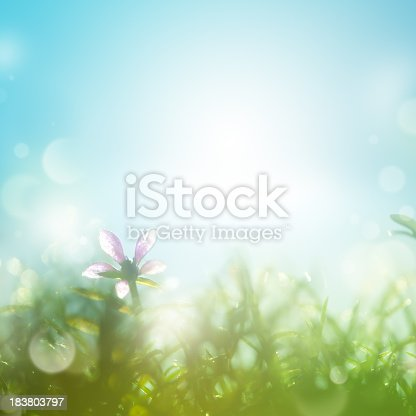 Field with daisies in the early morning. Shallow depth of field.