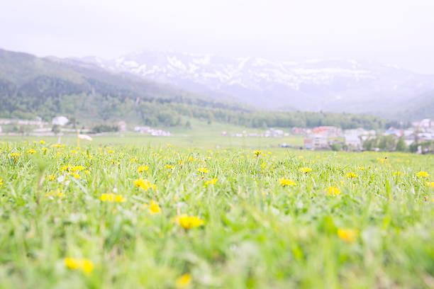 Feld mit am Rand und die wunderschönen Berge in Bakuriani – Foto