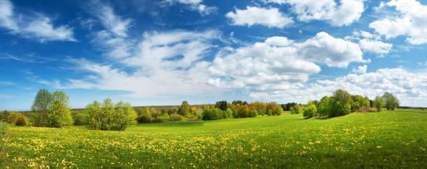 campo con dandelions e blu cielo - prateria campo foto e immagini stock