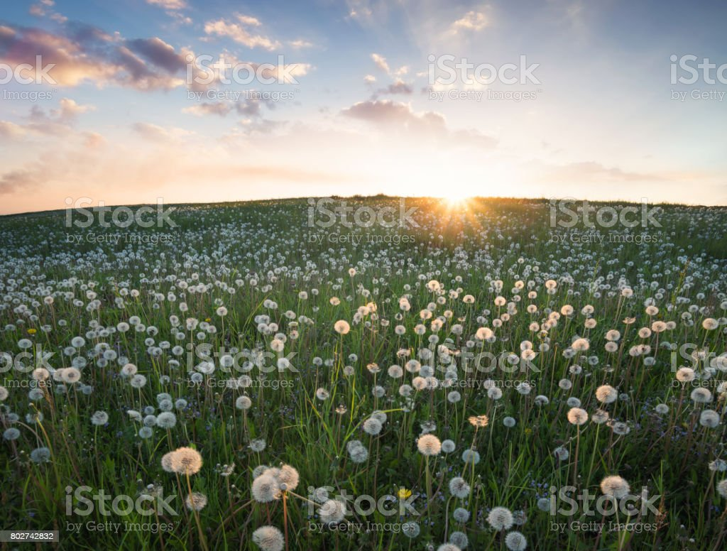 Field With Flower In The Mountain Valley Beautiful Natural Landscape