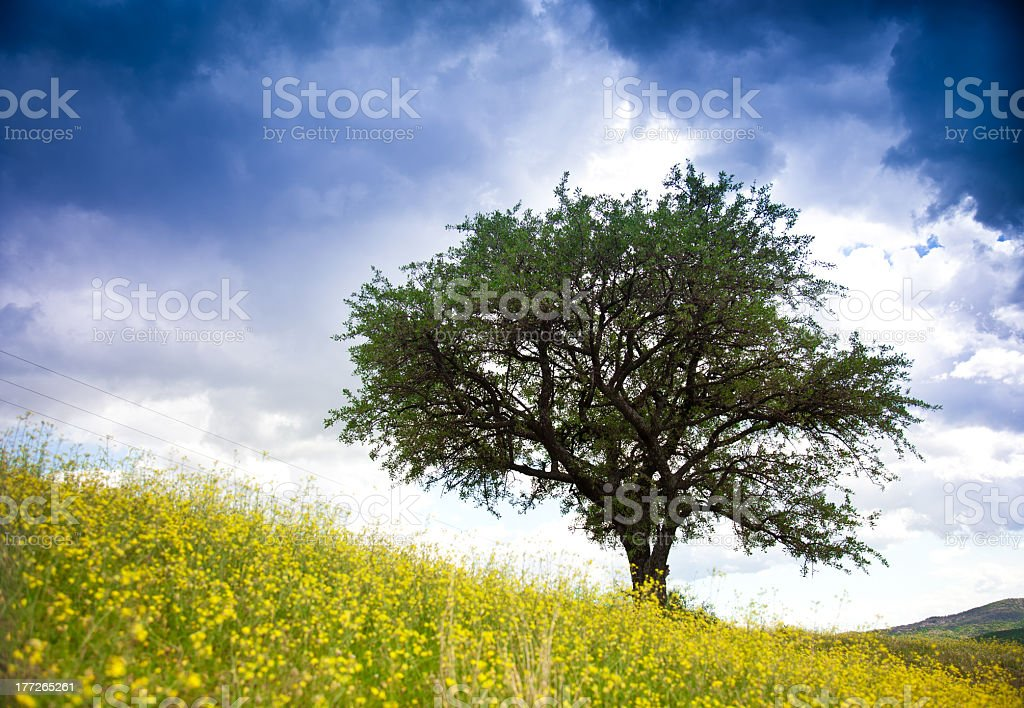 field with flowers and lonely Tree royalty-free stock photo