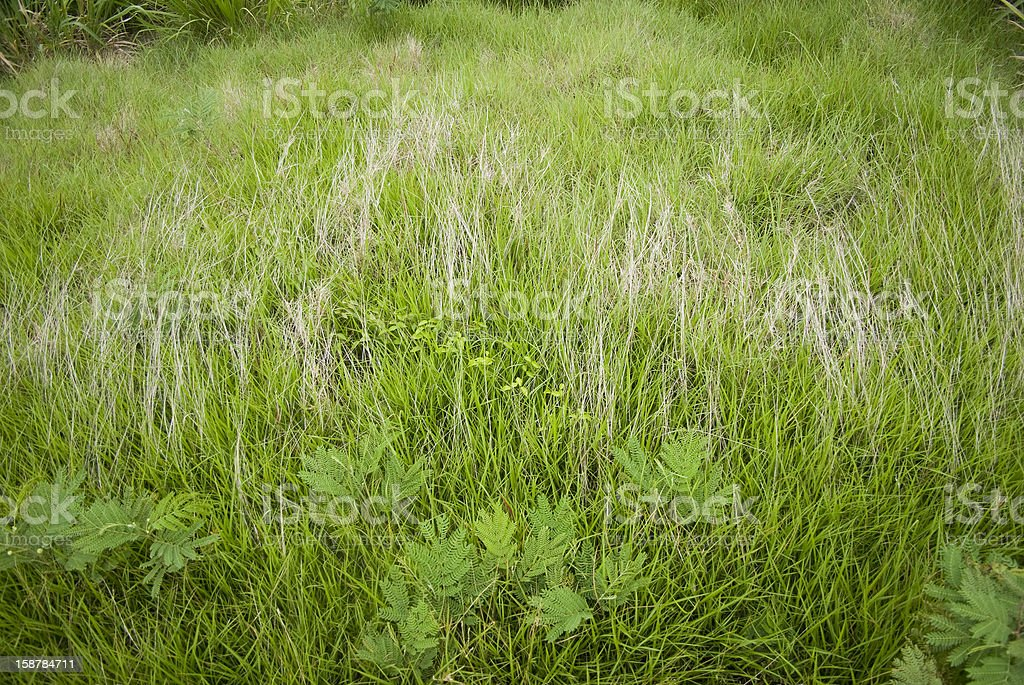 field with grass variety royalty-free stock photo